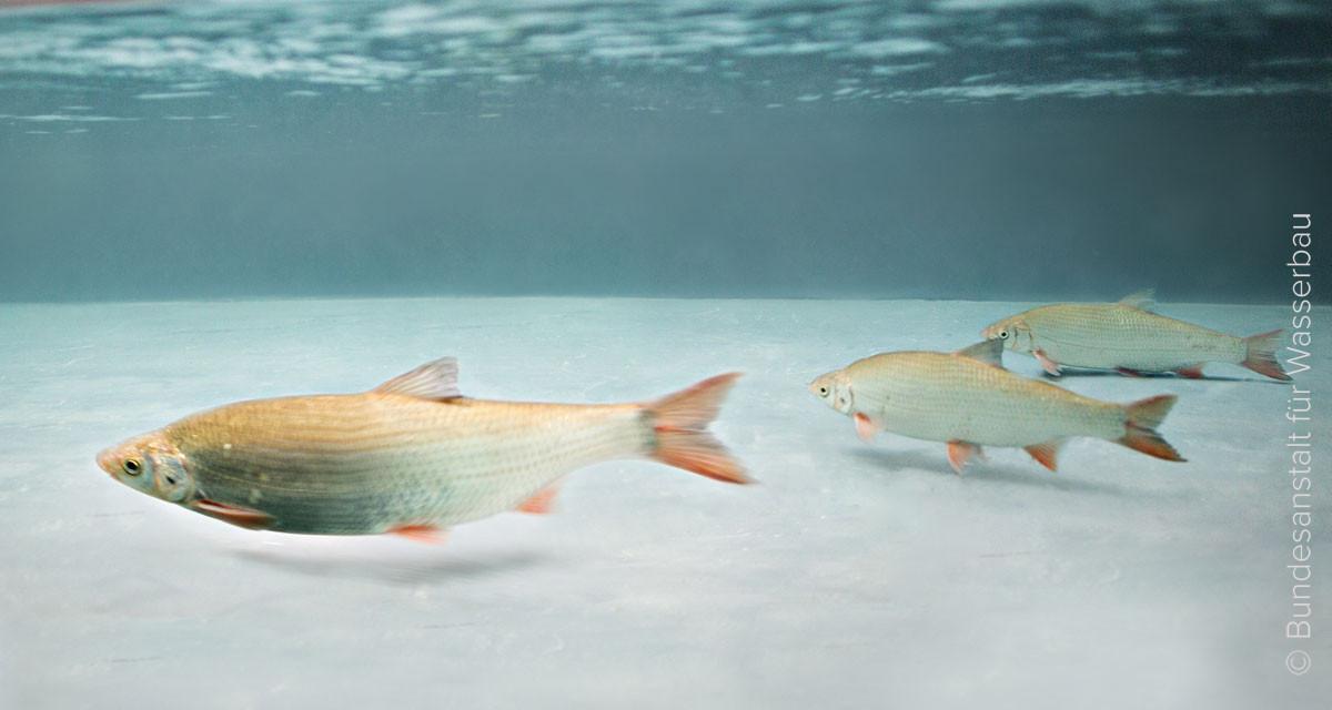 Viele Fische, die an der Küste der Küste